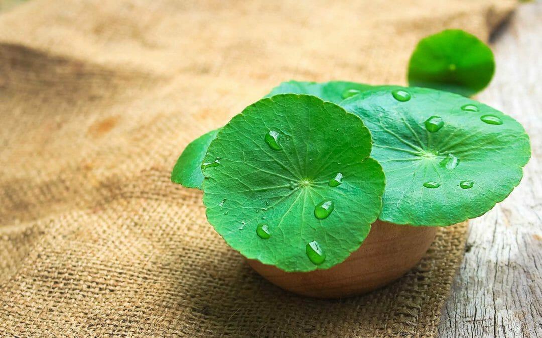Centella Asiatica: un aiuto naturale contro la cellulite e non solo